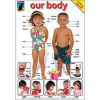 Our Body and Our Skeleton Posters