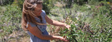 Growing More Sustainable: Global Impacts of the Herbal Supplements Industry
