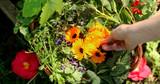 Spring Equinox Rituals, Health Tips & Recipes
