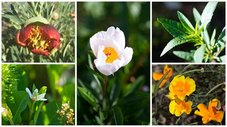 botanicals-collage.jpg