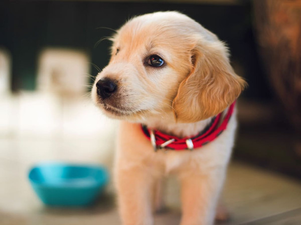 5 Ways a Puppy Will Improve Your Health