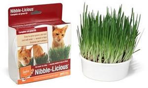 Pet Links Nibble-Licious Cat Grass Kit
