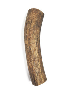 Rocky Mountain Elk Antler Large Whole 7-9  inch