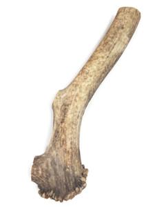 Elk Large Whole 10-12 inch