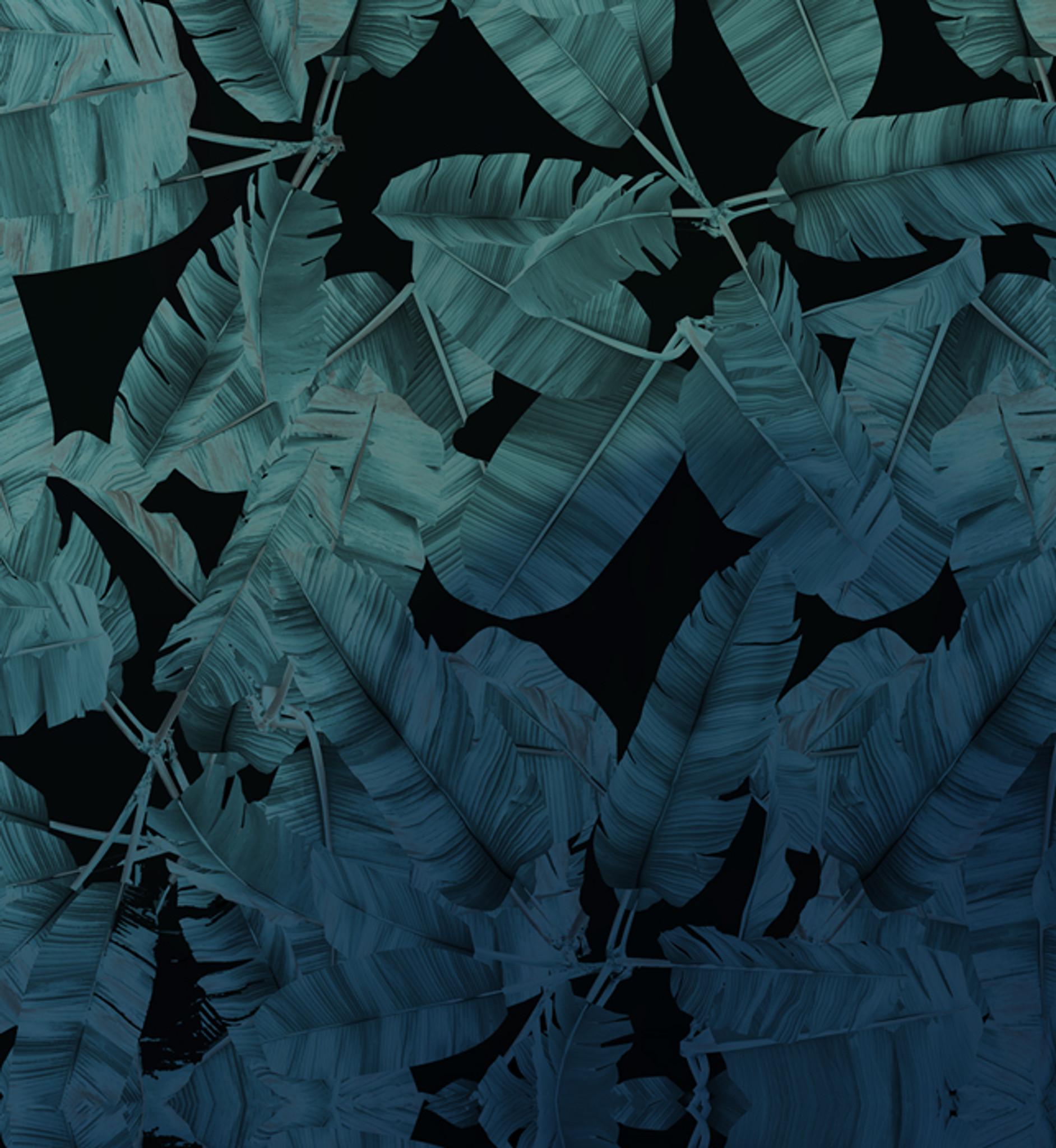 Wallpaper - Jungle Noir - Blue