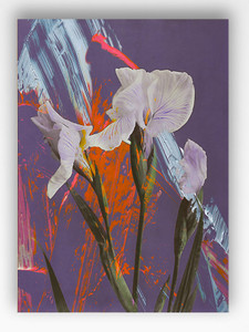 Art Print - Blurred Vision - Iris