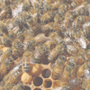 Package of Bees - Early April 2019 Pick Up