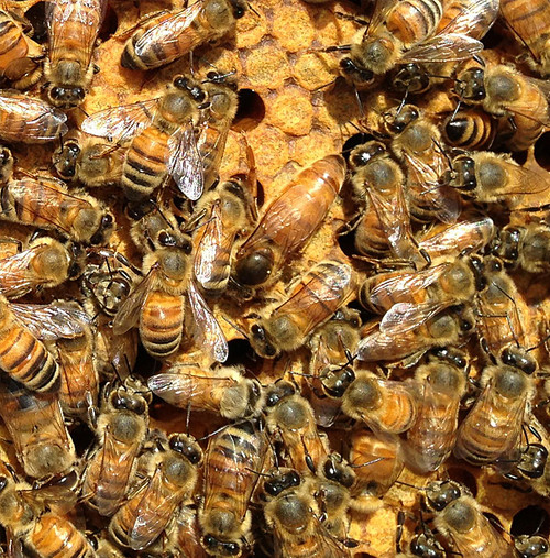 Package of Bees  - Late April 2021 Pick Up - Coming Soon
