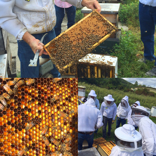 Spring Beekeeping Endeavors (Online) Saturday, March 27, 2021 - Please call, 2 places left.