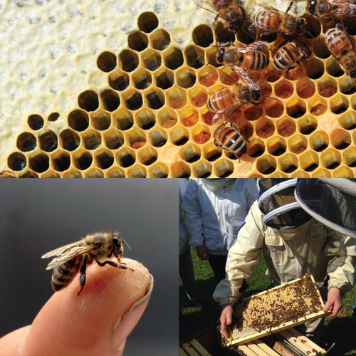 Beekeeping Fundamentals - Saturday, January 23, 2021  - Sold Out