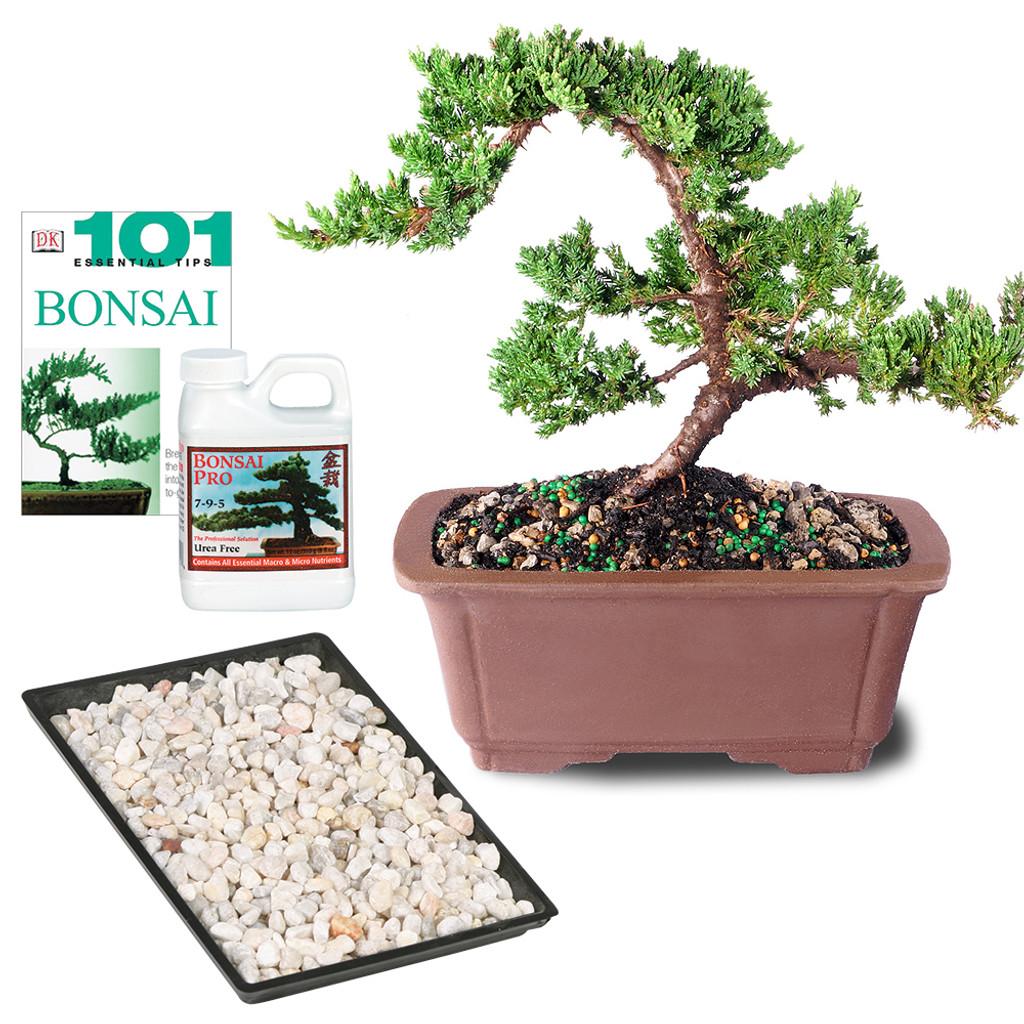 Green Mound Juniper Complete Gift - DT7079GMJCG