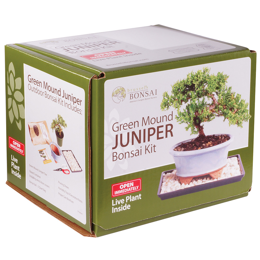 Green Mound Juniper Bonsai Kit - DTGMJKIT