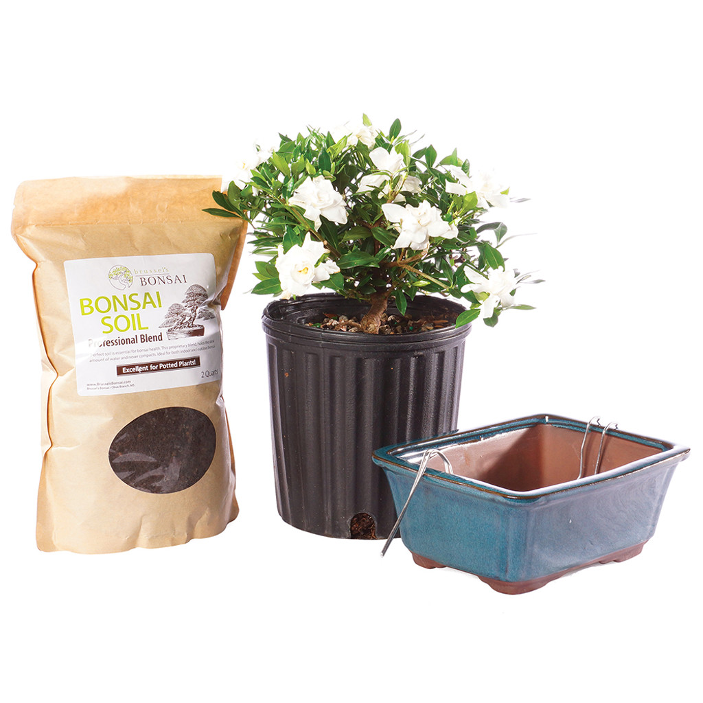 Gardenia - Pot It Yourself - DTGR1GPIY