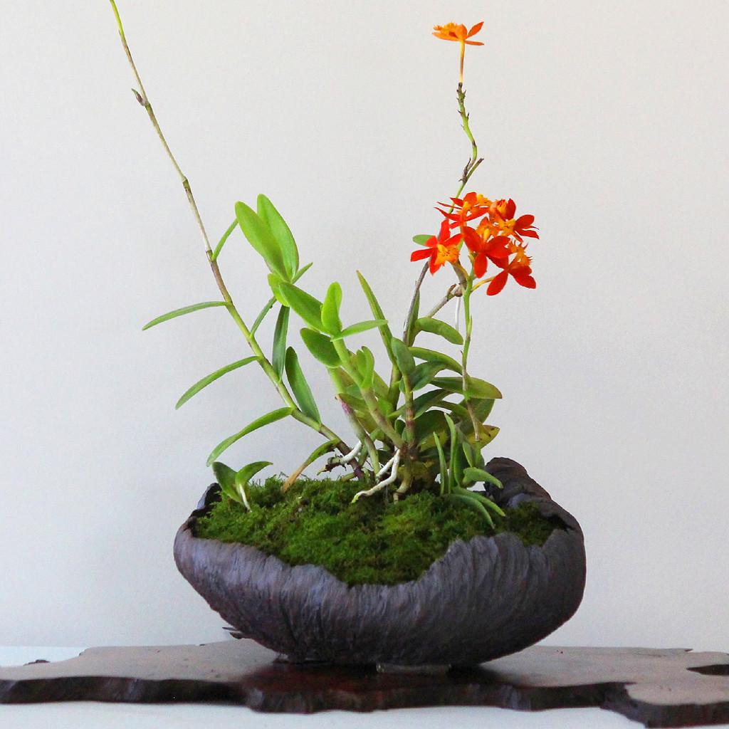 Kusamono Arrangement