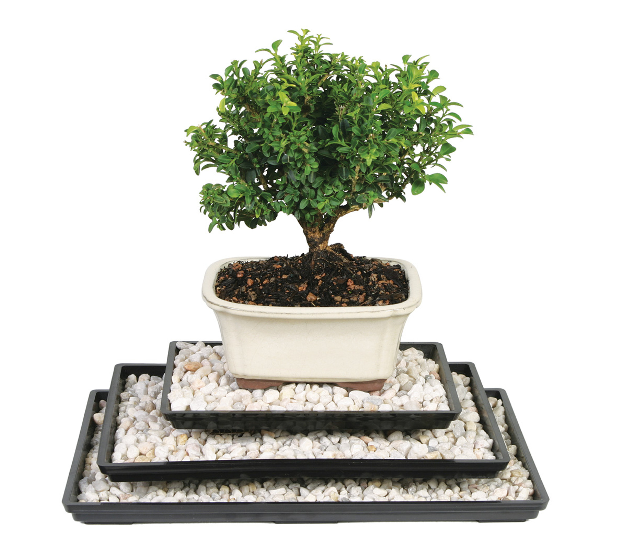 11 Bonsai Drip Tray Bonsai Tree Humidity Tray Brussel S Brussel S Bonsai