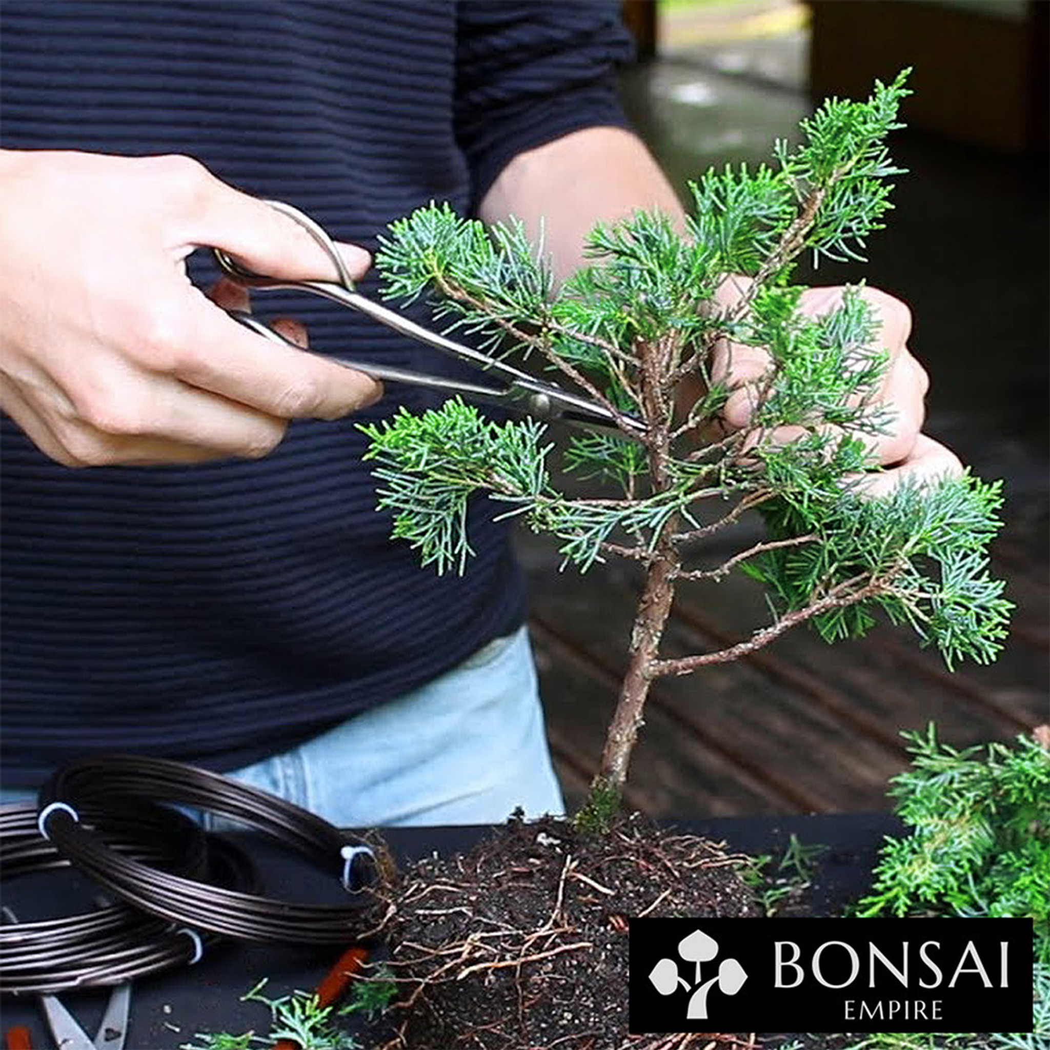 Getting Started With Bonsai Brussel S Bonsai