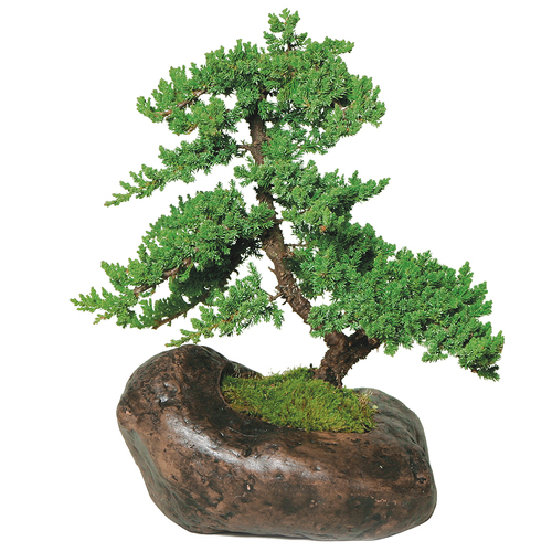 Green Mound Juniper  In Rock Pot - DT8001GMJR
