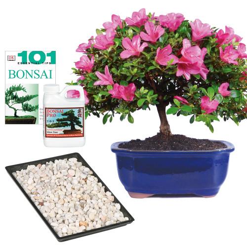Azalea Complete Gift - DT6016AZCG