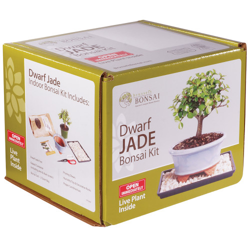 Dwarf Jade Bonsai Kit - DTDJKIT