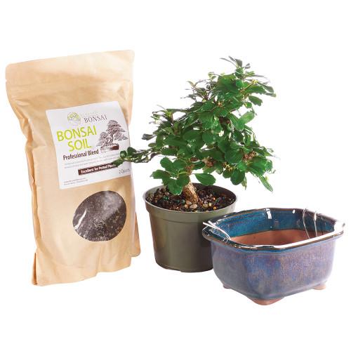 Fukien Tea - Pot It Yourself - CTFT6PIY