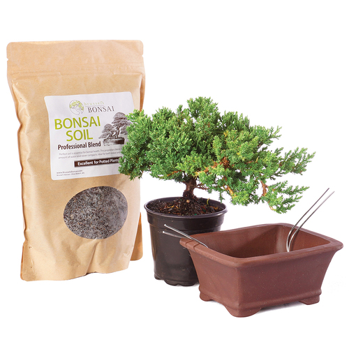 Green Mound Juniper - Pot It Yourself - DTGMJ4PIY