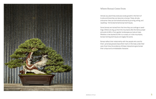 Little Book of Bonsai