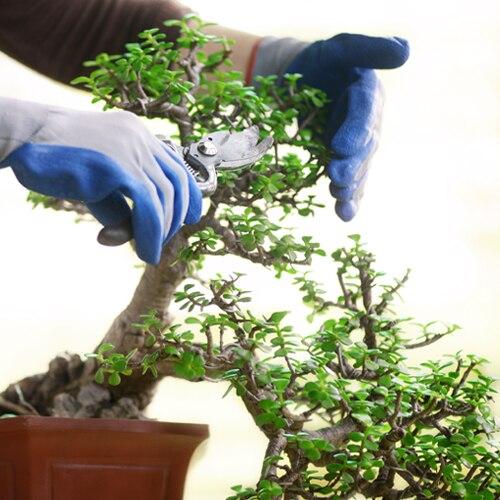 bonsai_master