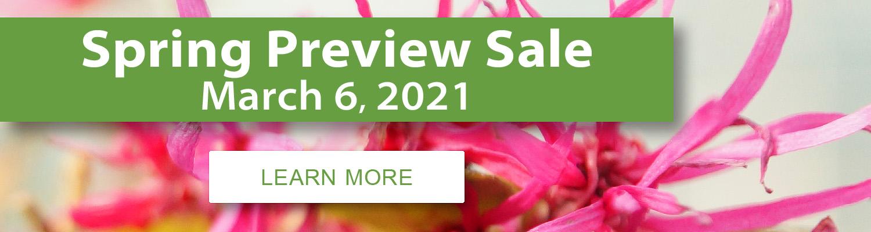 brussels-bonsai-spring-preview-sale-2021.jpg