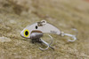 SteelShad Original White Shad