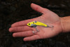 SteelShad Original Yellow Shad