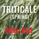 Spring Triticale - Surge 141