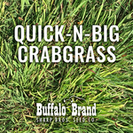 Crabgrass, Quick-n-Big