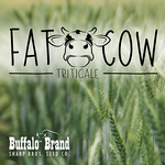 FAT COW Triticale Awnletted Medium to Late Maturity