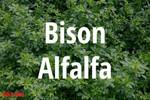 Bison Alfalfa