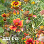 Blanketflower (perennial)