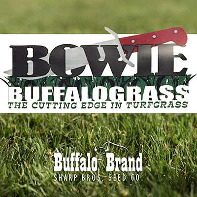 Bowie Buffalograss