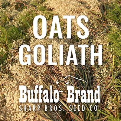 Oats - Goliath (Tall Long Season, 8 days later than Jerry)