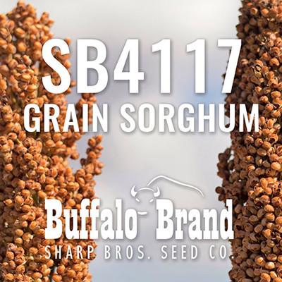 SB4117 Grain Sorghum (Milo)