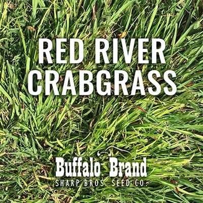 Crabgrass, Red River/Dah's Big River