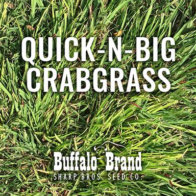 Crabgrass, Quick-n-Big