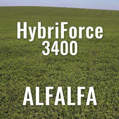 Alfalfa - HybriForce 3400