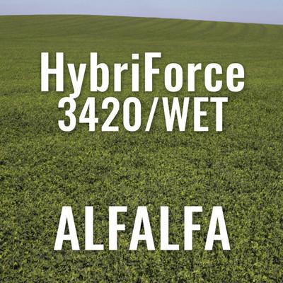 Alfalfa - HybriForce 3420-WET