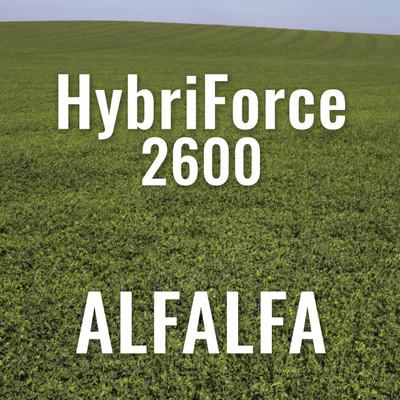 HybriForce 2600 Alfalfa