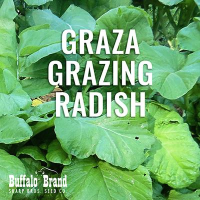 Graza Grazing Radish