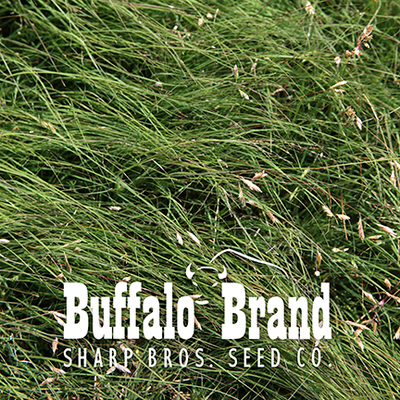 Buffalograss (Range Quality)