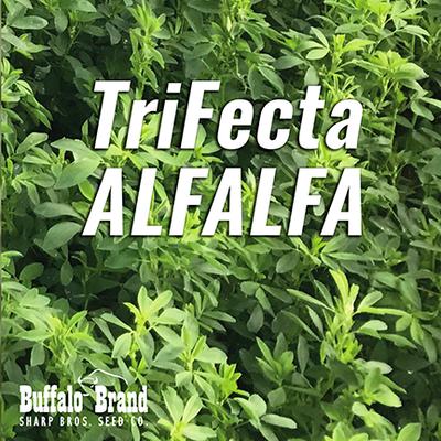 TriFecta Alfalfa