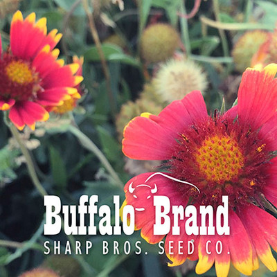 Indian Blanket (Annual Gaillardia, Firewheel)