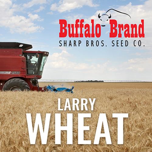 Wheat - Larry
