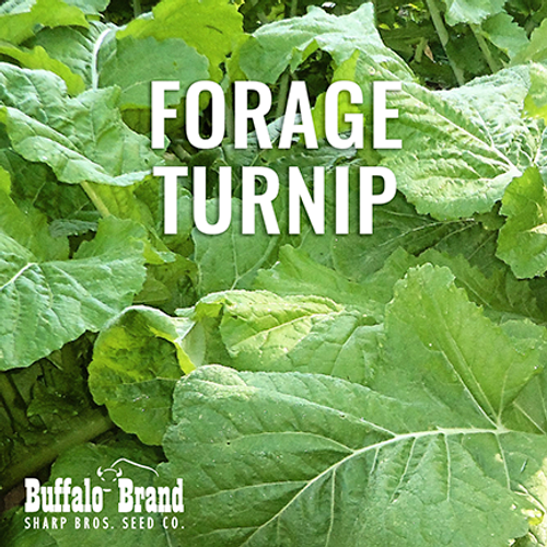 Hunter Forage Turnip