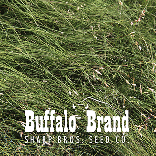 Buffalograss (Range Quality)